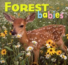 Forest Babies (Board Book)