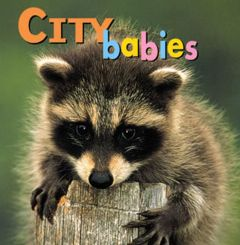 City Babies (Board Book)