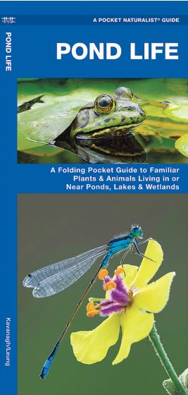 Pond Life (Pocket Naturalist® Guide).