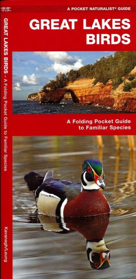Great Lakes Birds (Pocket Naturalistֳ'ֲ® Guide).