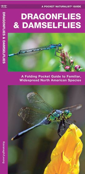 Dragonflies And Damselflies (Pocket Naturalist® Guide).
