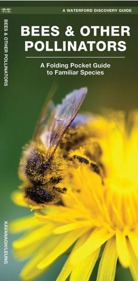 Bees & Other Pollinators (Waterford Discovery® Guide)