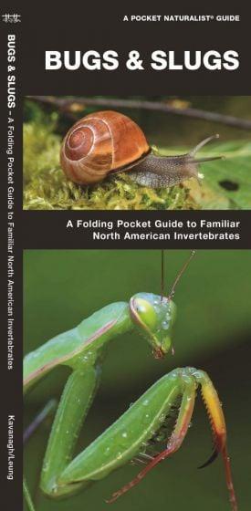 Bugs & Slugs, 2nd Edition: A Folding Pocket Guide to Familiar North American Invertebrates (Pocket Naturalist® Guide)