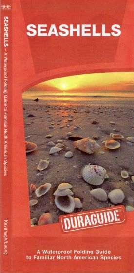 Seashells, 2nd Edition (Pocket Naturalist® Guide)