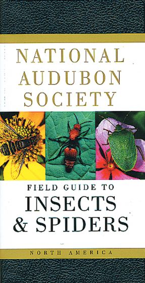 Insects And Spiders (National Audubon Society Field Guide)