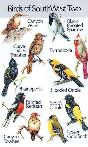 Southwestern Birds #2 (Birdsong Identiflyer Card)