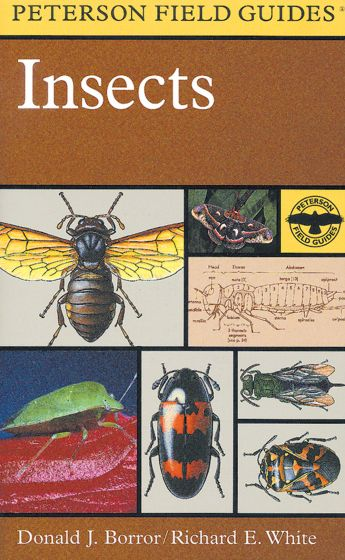 Insects Of North America (Peterson Field Guide)