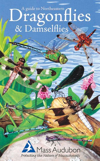 Guide To Northeastern Dragonflies And Damselflies (A)