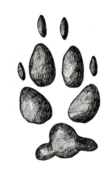 COYOTE TRACK STAMP (Rear Right Foot).