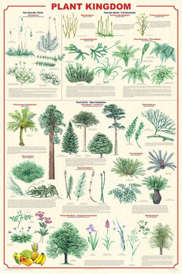Plant Kingdom Poster (Laminated)