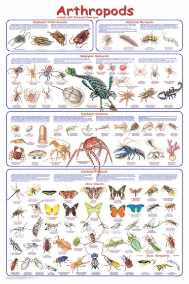Arthropods Poster (Laminated)
