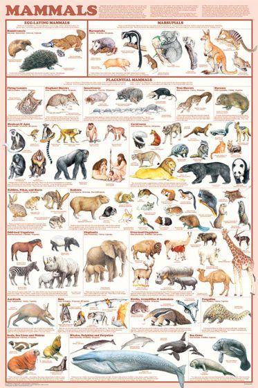 Mammals Poster (Laminated)