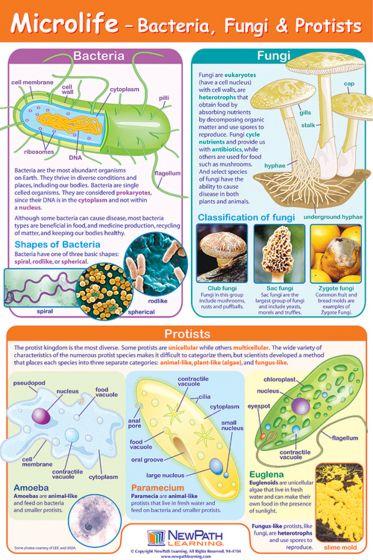 Microlife Poster (Laminated)