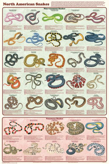 North American Snakes Poster (Laminated)