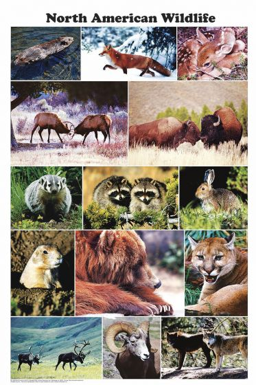 North American Wildlife (Laminated Poster)