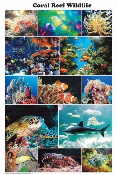 Coral Reef Wildlife (Laminated Poster)