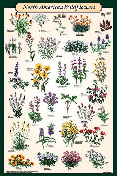 North American Wildflowers Poster (Laminated)