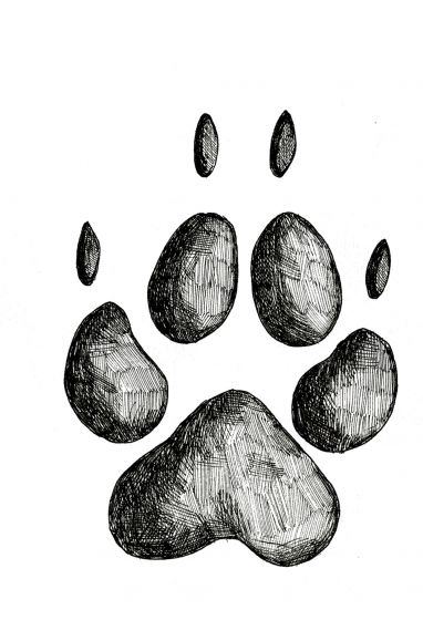 COYOTE TRACK STAMP (Front Left Foot).