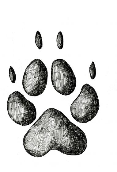 COYOTE TRACK STAMP (Front Right Foot).