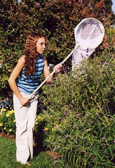 """Field Insect Net (12"""" Aerial)"""