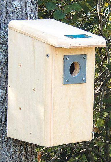 Backyard Bird House.
