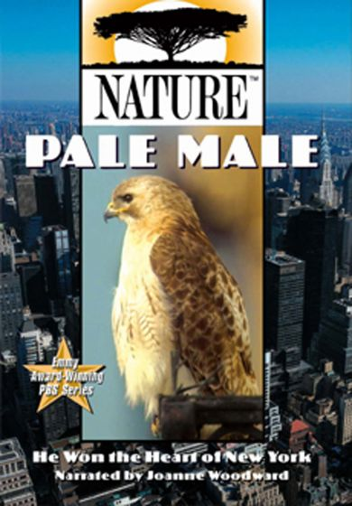 Pale Male (Dvd)