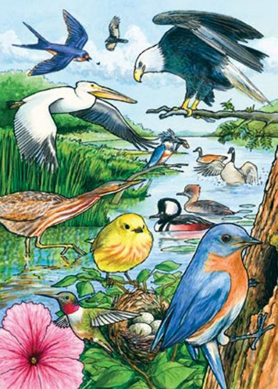 North American Birds (35 Piece Tray Puzzle)