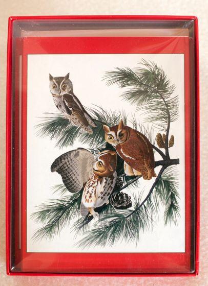 Audubon'S Owls Holiday Boxed Notes