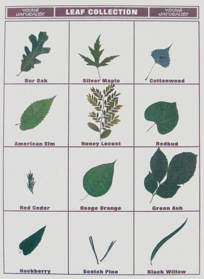 Leaf Collection Poster Board Display.