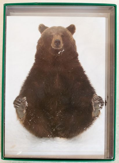 Eurasian Bear Holiday Boxed Notes