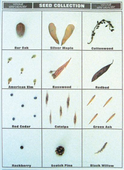 Seed Collection Poster Board Display