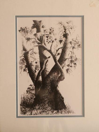 Sycamore Sketch Print