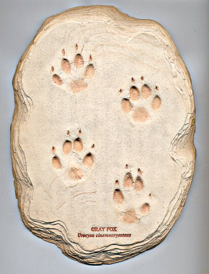 Fox (Gray) Track Cast (Large Plaque)