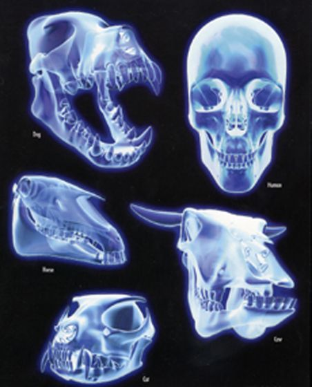 Magnetic Skulls