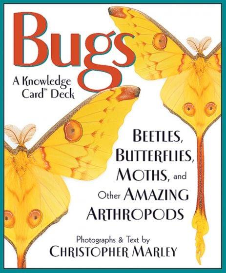 Bugs Knowledge Cards: Beetles