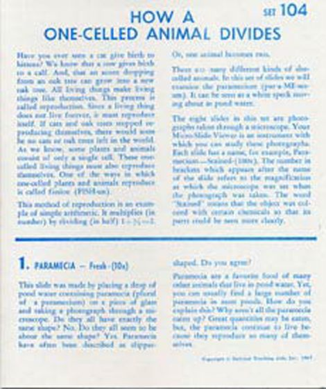 How A One-Celled Animal Divides (Microslide® Lesson Set).
