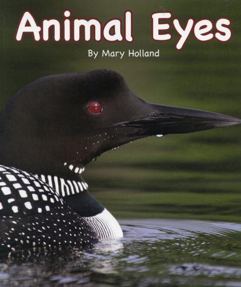 Animal Eyes (Animal Senses & Anatomy Series)