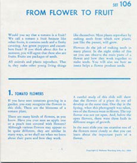 From Flower To Fruit (Microslide® Lesson Set)
