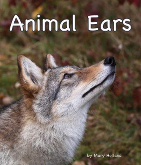 Animal Ears (Animal Senses & Anatomy Series)