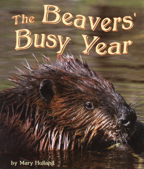 Beaver's Busy Year