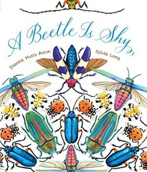 Beetle is Shy (A)