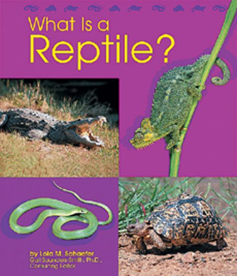 What Is A Reptile? (Animal Kingdom Series For Ages 5-6)