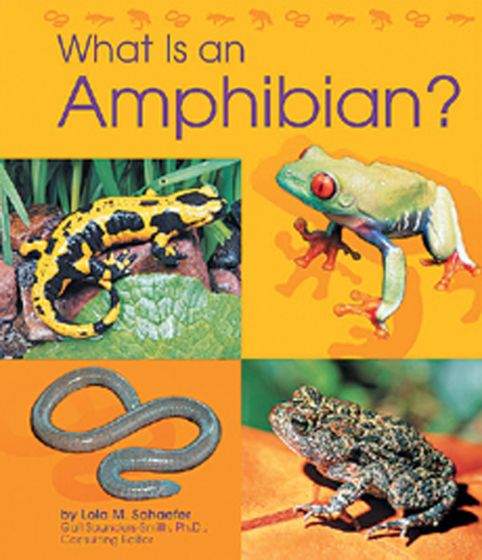 What Is An Amphibian? (Animal Kingdom Series For Ages 5-6)