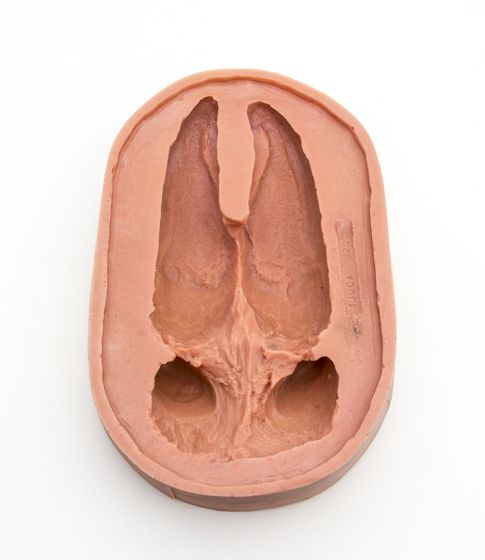 Moose Track Mold: Adult Front