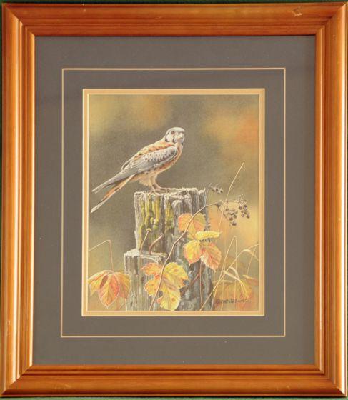 "Kestrel ""Autumn Sun"" Framed Print"