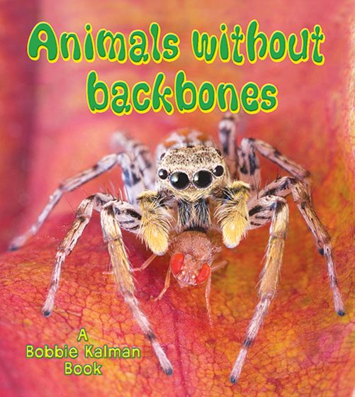 Invertebrates: Animals Without Backbones (Big Science Ideas Series)