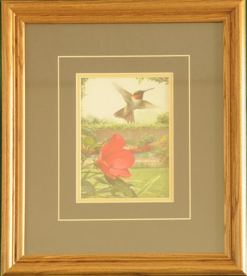 "Hummingbird ""Hummingbird In Hibiscus"" Framed Print"