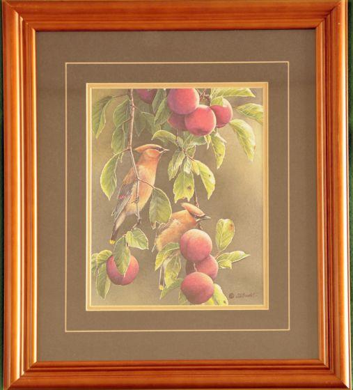 "Cedar Waxwings ""Bandits"" Framed Print"