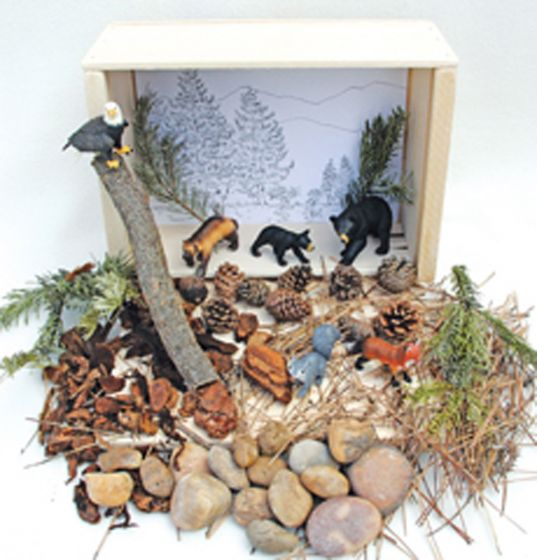 Evergreen Forest Diorama (Create-A-Scene® Habitat Diorama Kit).