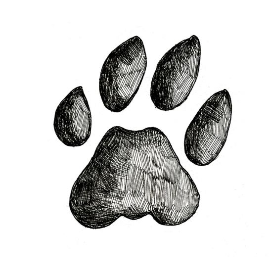 BOBCAT TRACK STAMP (Front Left Foot).